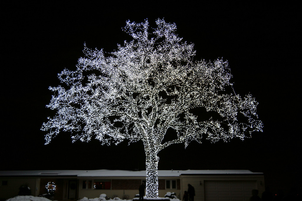 lighted-oak-tree